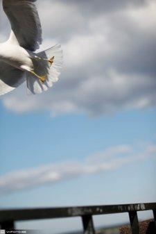 Fågel på flykt